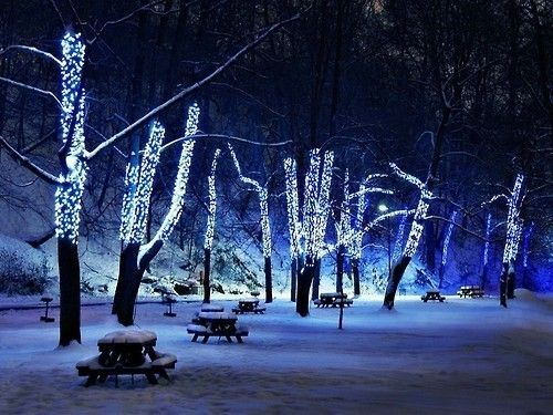 Winter: Snow Photography, Blue Christmas, White Lights, Blue Lights, Winter Wonderland, Christmas Lights, White Christmas, Photography Tips, Outdoor Events