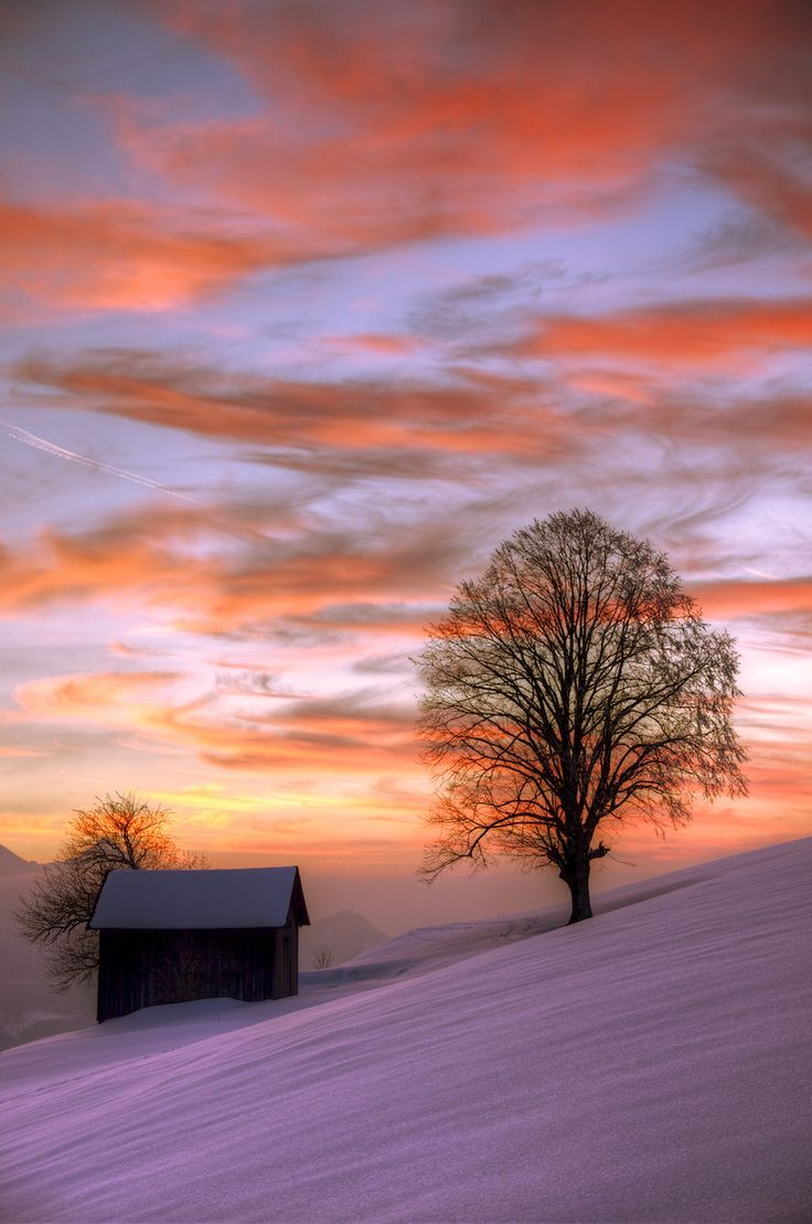 Winter Silhouette by Martin Herber