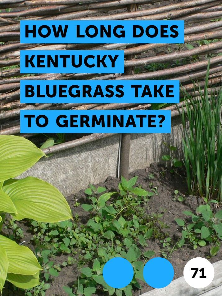 Learn How Long Does Kentucky Bluegrass Take To Germinate How To Guides Tips And Tricks Bluegrass Kentucky Germination
