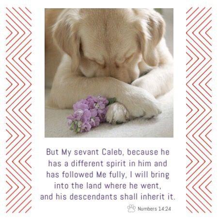 Caleb mean dog = Proskuneo