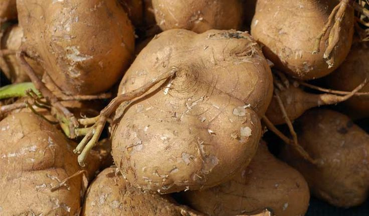 Jicama: Nutrition Facts and Health Benefits