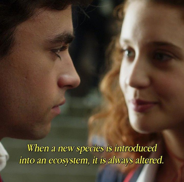 Elite Netflix Series Series De Netflix Frases
