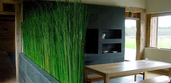 Oltre 25 fantastiche idee su arredamento piante da interni su pinterest decorazioni vegetali - Piante da appartamento resistenti e decorative ...