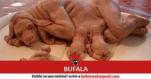 Attualià: #BUFALA #Scoperta #shock: campagna siciliana abitata da uomini-cani (link: http://ift.tt/2lPBlOo )