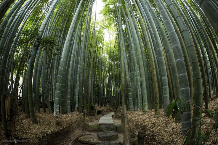 500px 上の Motohisa Shimazu の写真 Kamakura Bamboo TempleHOUKOKU temple