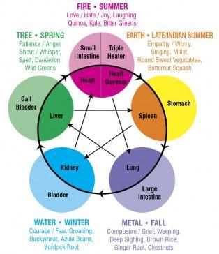 TCM 5 element/seasonal/organ cycle #tcm #acupuncture #5 element www.healingartshealthcenter.com