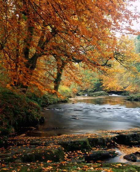 River Dart, Dartmoor National Park, Devon, England Copyright: Craig Joiner