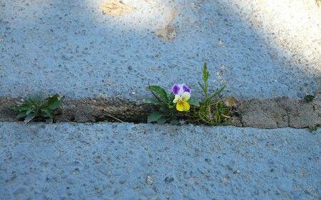 Struggle - Flowers Wallpaper ID 123638 - Desktop Nexus Nature