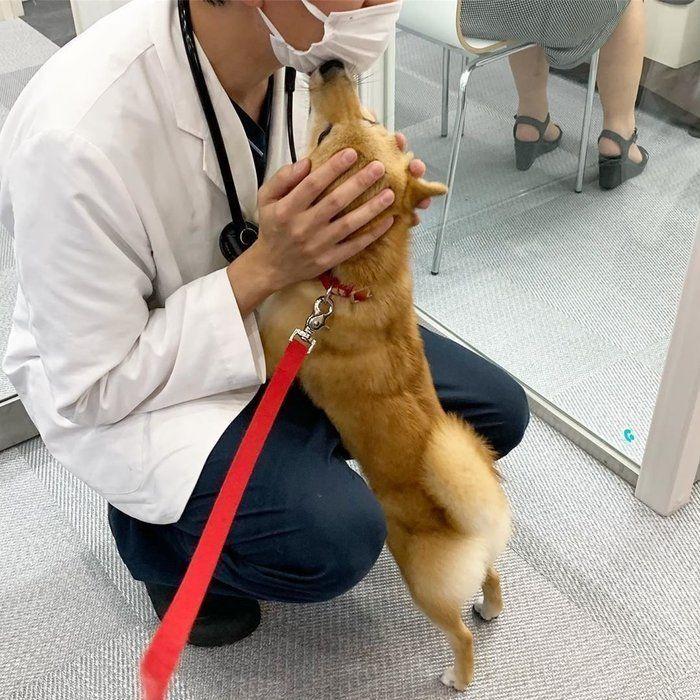 もう誰にも止められない 犬の ペロペロ攻撃 がインスタで話題 いぬのきもちweb Magazine 犬 いぬ ペロペロ
