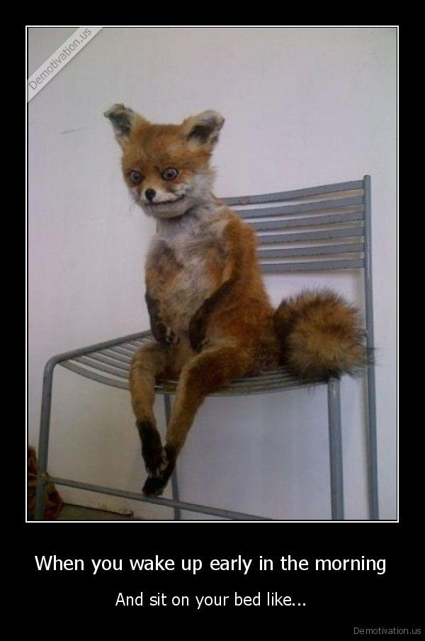sitting, one, bed,sad, fox   ha ha :-P   Funny, Fox memes ...