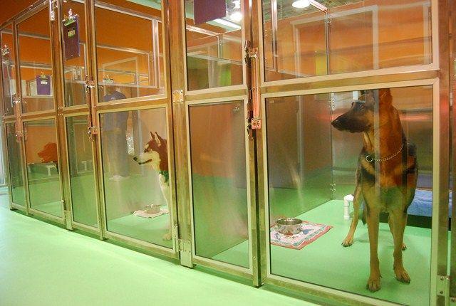 3 Dog Kennel Ideas Outdoor