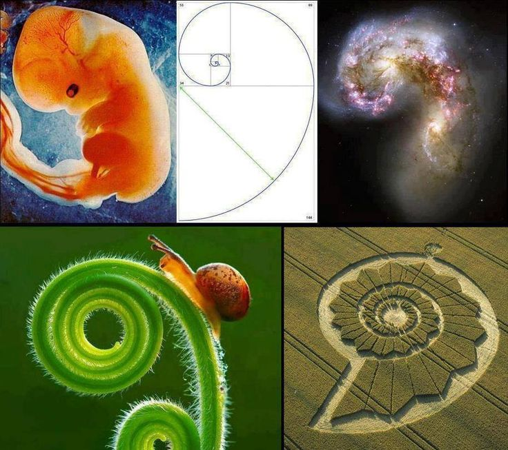 Examples of the golden ratio in nature. Sacred geometry. It's everywhere.  If only