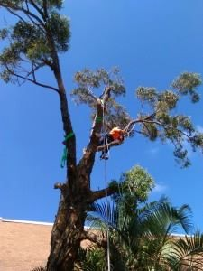 Touchwood Trees offers tree Surgery at effective and affordable range. We offer professional tree surgery in Sydney.Our tree work is always carried out to a very high standard with the help of fully trained and competent staff.