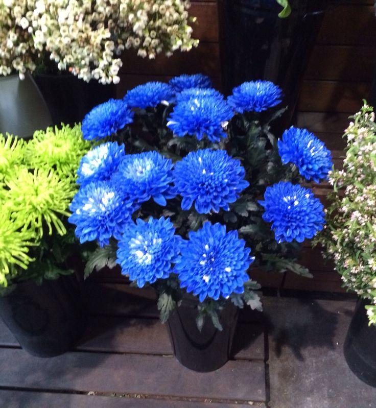 Blue for spring. So pretty. Xx