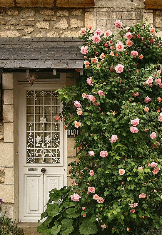 beautiful door & flowers