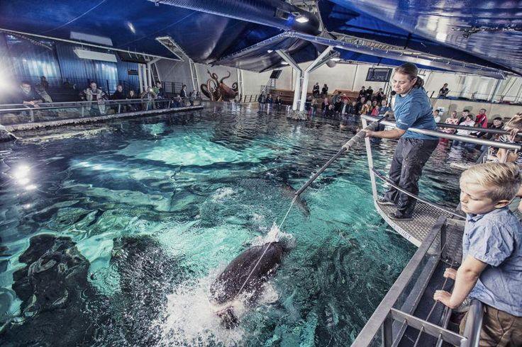 Kattegatcentret - lad dig omringe af hajer
