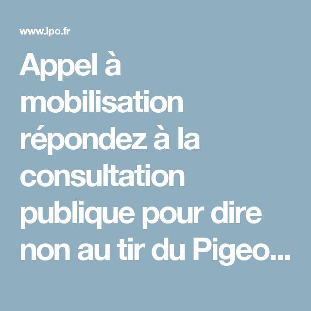 Appel à mobilisation répondez à la consultation publique pour dire non au tir du Pigeon ramier au printemps 2017 en Ardèche - Actualités - LPO