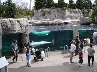 Mystic Aquarium, CT Nothing better than being a member Liam loves going at least 2 days a week!