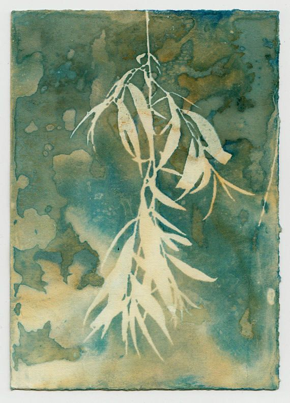 Cyanotype printing is an alternative photography process that uses sunlight to expose the image. I developed a way of taking the traditional cyanotype process and altering the process so that instead of a normal blue and white print, I could get varied shades of blue, green,
