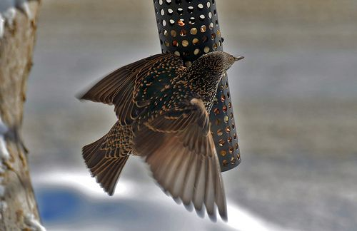 Patterned Feathers