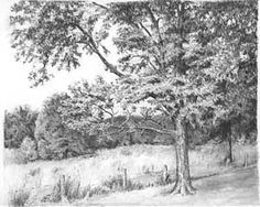 How to Draw Trees by Diane Wright