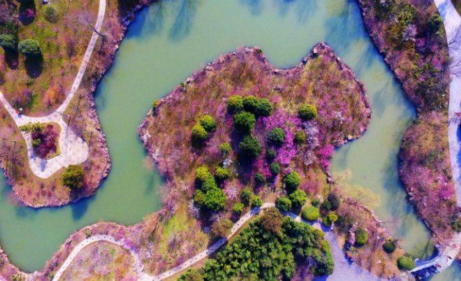 Если в Японии восторгаются цветением сакуры, то жители Поднебесной любуются цветением другого дерева. Персик цветет обильно и создает удивительные природные картины, источая чарующий аромат. В этот период китайцы откладывают свои повседневные дела и наслаждаются весенним чудом. Цветение персика — настоящий праздник для местных жителей.
