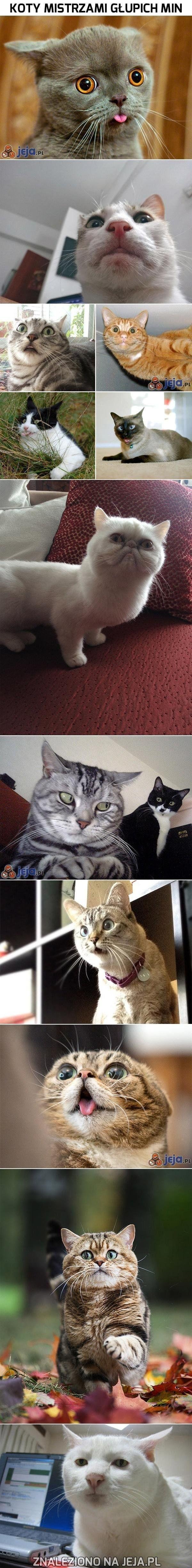 Haha :) #animals #cats #pets