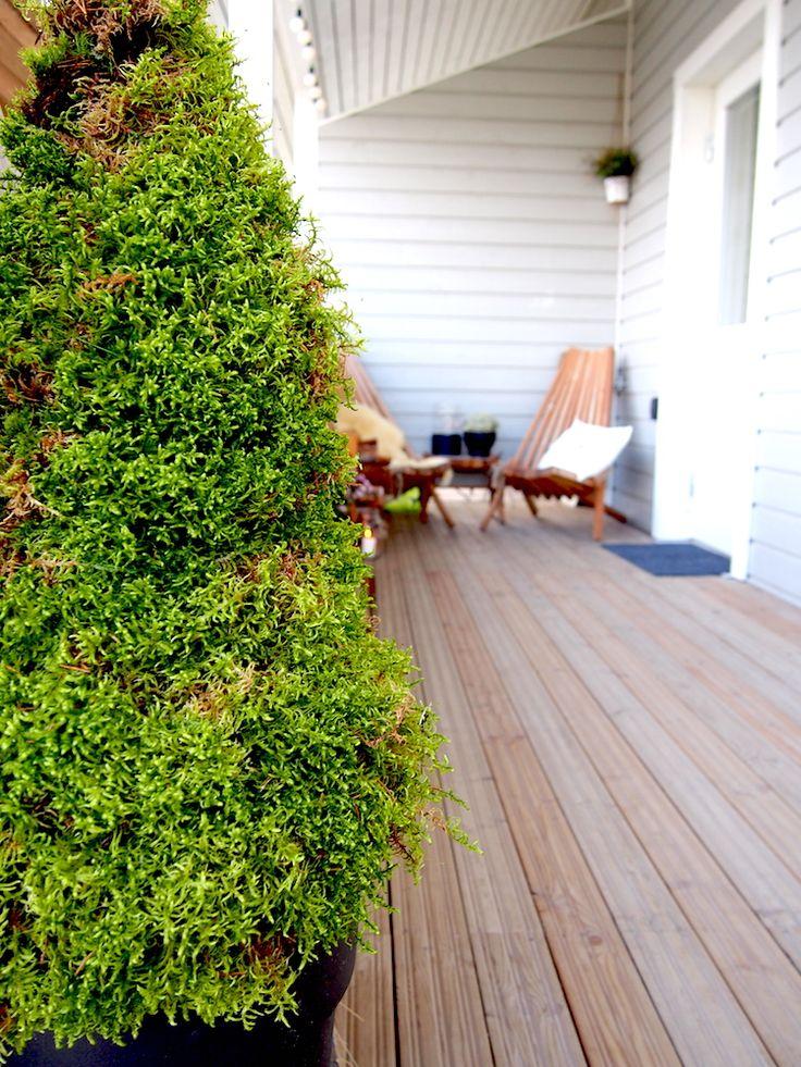 Tällä kertaa askartelin terassille sammalpuut. Idea on lähtöisin Pinterestin ihmeellisestä maailmasta. Näin kuvan tuijan näköisestä puusta, joka oli tehty sammaleesta. Ja pakkohan sitä oli itsekin kokeilla. Tässä siis vaihtoehto havuille koristamaan syksyistä ja talvista terassia. Kaikessa yksinkertaisuudessaan puun runkona toimii puunsuojaverkko, siis sellainen vihreä, muovitettu verkko, jolla voi suojata puita ja pensaita rusakoilta. Verkosta on …