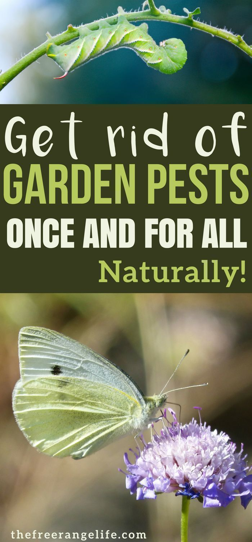 2741ca3a2bfb98b248ca3beea1635b58 - Diy Organic Pest Control For Gardens