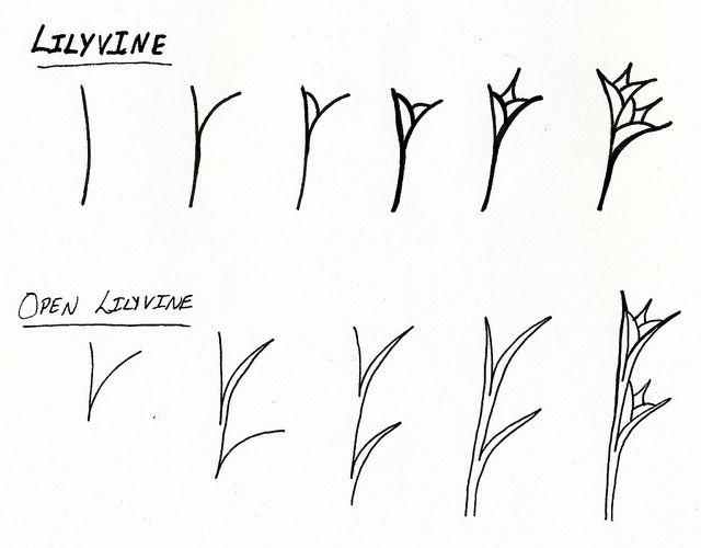 Zentangle Pattern: Lilyvine! by jcull, via Flickr, Jess Cullinan