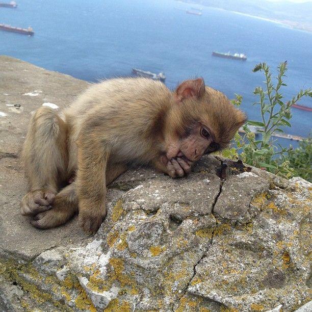Gibraltar στην πόλη Gibraltar