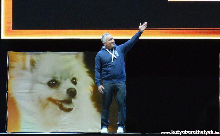 Cesar Millan Live Budapest - A csodálatos kutyadoki
