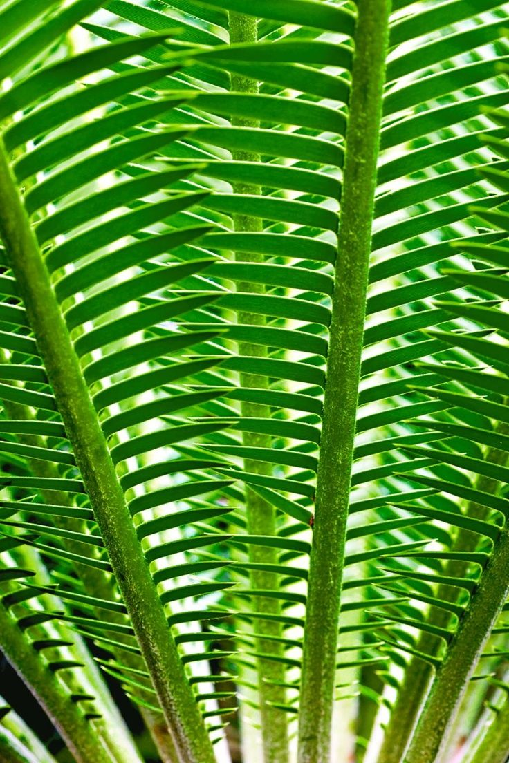 Green | Grün | Verde | Grøn | Groen | 緑 | Emerald | Colour | Texture | Style | Form | Patterns in nature                                                                                                                                                      More