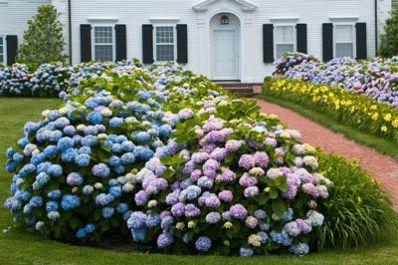 Best 25+ Endless summer hydrangea ideas on Pinterest ...