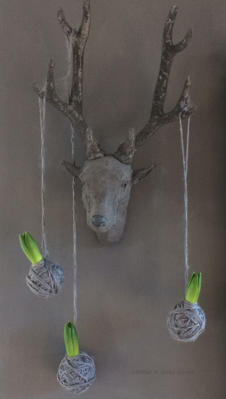 Bloembollen met wol omwikkeld - Wool wrapped bulbs #hyacinth #bloembol #wol #bulbs