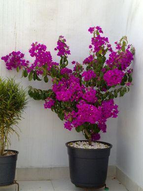 Bonito Jardim: Plantando em vasos