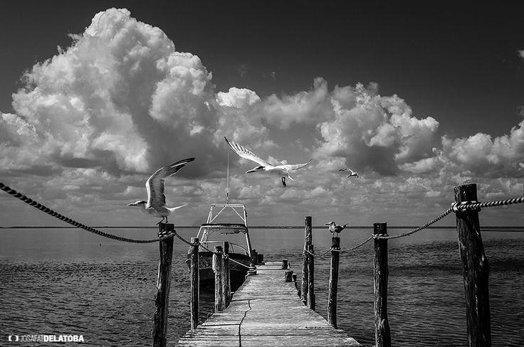 Hol Box Quintana Roo  #josafatdelatoba #cabophotographer #landscapephotography #holbox #mexico #quintanaroo #birds
