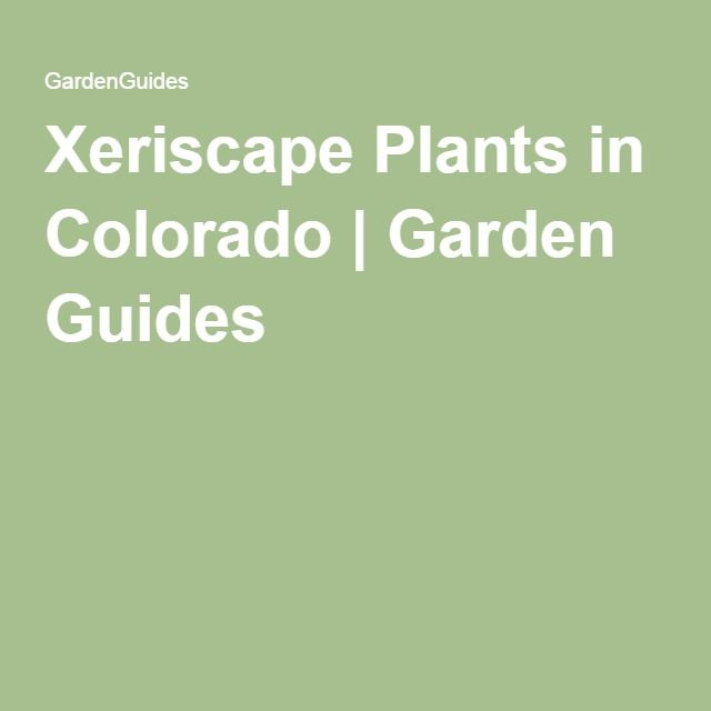 1000+ Ideas About Xeriscape Plants On Pinterest