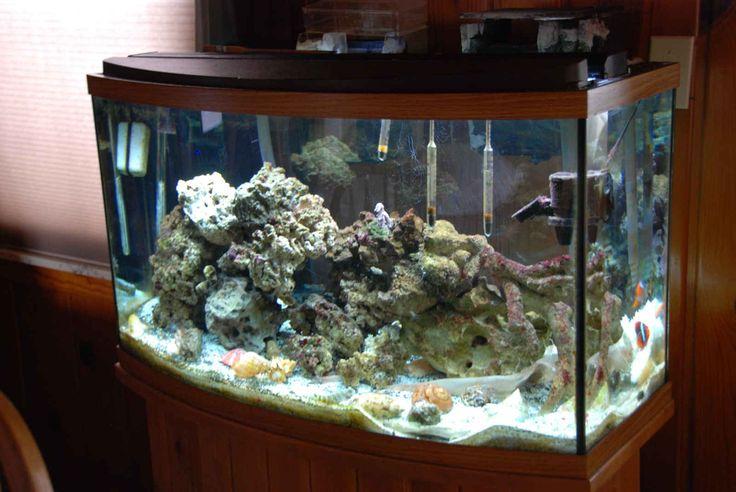 Fish Tank Decoration Design ~ http://www.lookmyhomes.com/amazing-fish-tank-decoration/