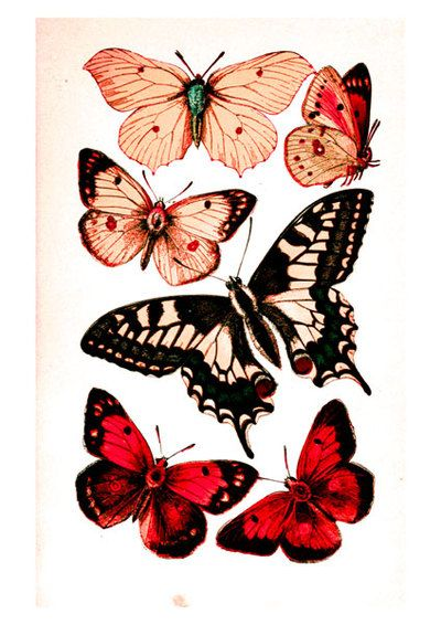 Printable Butterflies in Four Color Schemes  By: Mina Keenan from Craft Found