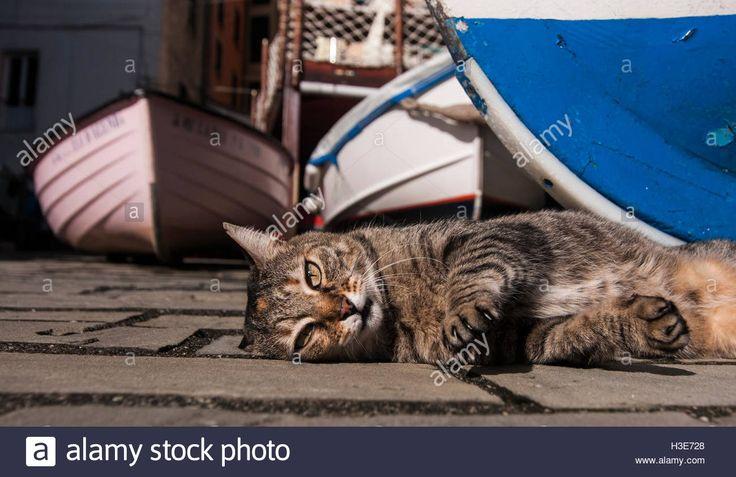 Lazy springtime? A cat between boats at Cinque Terre, Liguria #travel #lifestyle #cat #cinqueterre #springtime