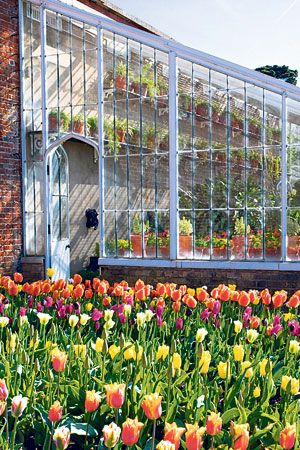 A Victorian greenhouse and tulips in the walled garden at Osborne House, Isle of Wight (Pic: Heather Edwards)