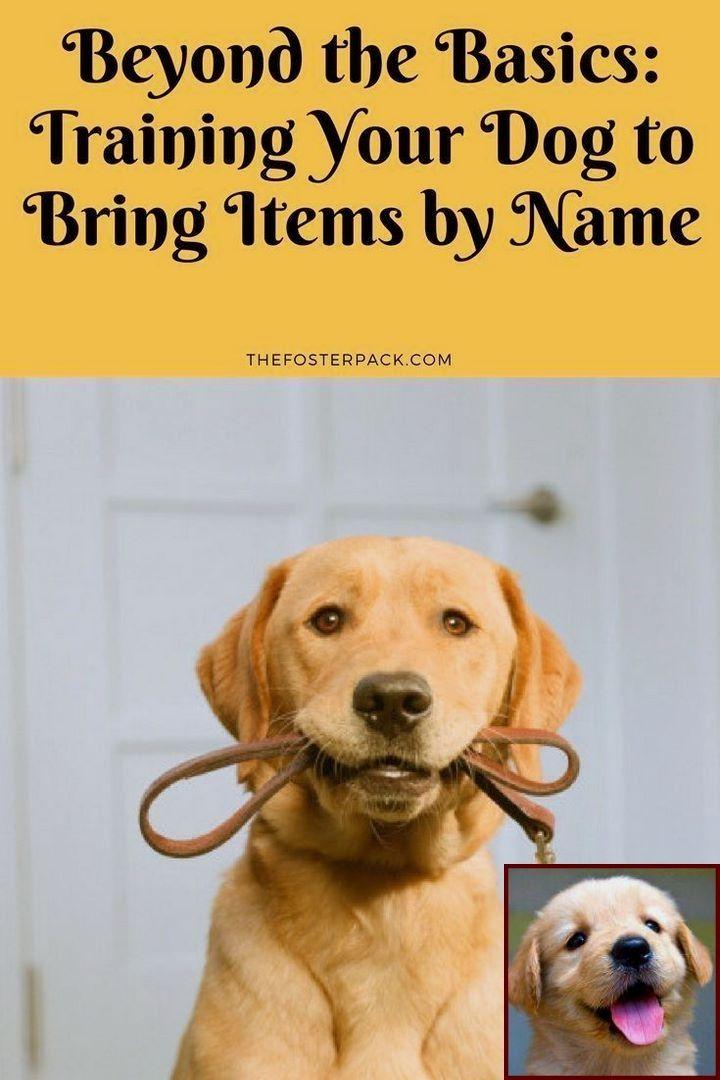 Dog Behavior Zoetermeer And Dog Training Classes Quincy Ma Dog