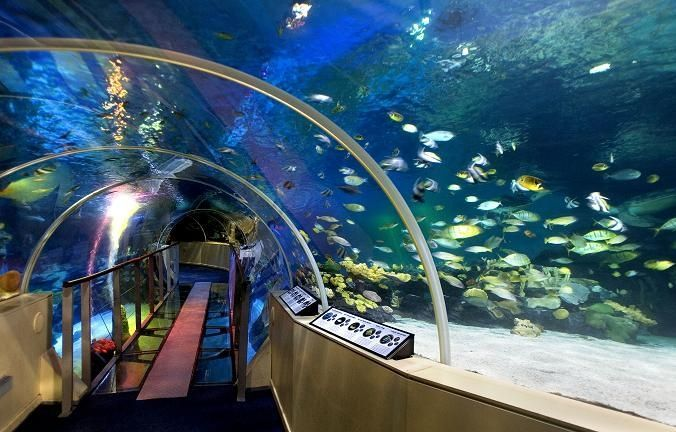 Sealife (London)