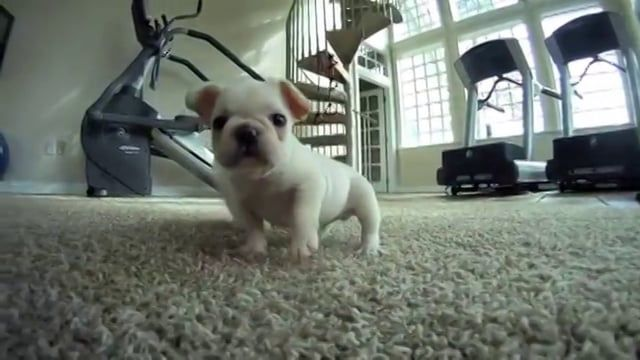 Affordable Pup is the largest puppies breeder and seller in Ohio. We breed a wide variety of pedigree puppies including French Bulldogs http://affordablepup.com/french-bulldog-puppies-for-sale , Havanese, Pomeranian, Yorkie puppies etc. Our babies are raised right here with us, so that we bring to you a happy, healthy and well socialized puppy!  If you are looking to buy French Bulldogs, Havanese puppies or another puppies breeds check our website.