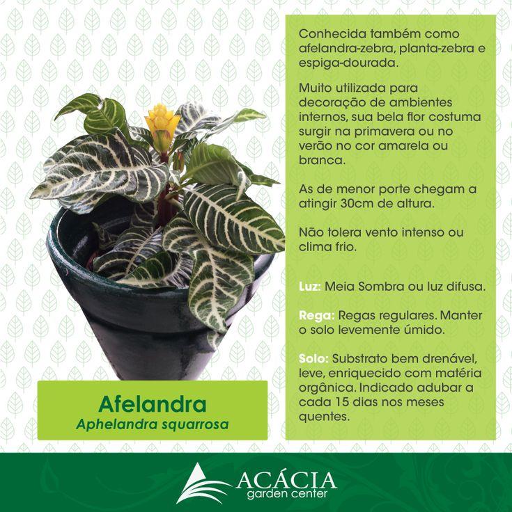 40 best images about plantas como cuidar on pinterest - Plantas de exterior faciles de cuidar ...