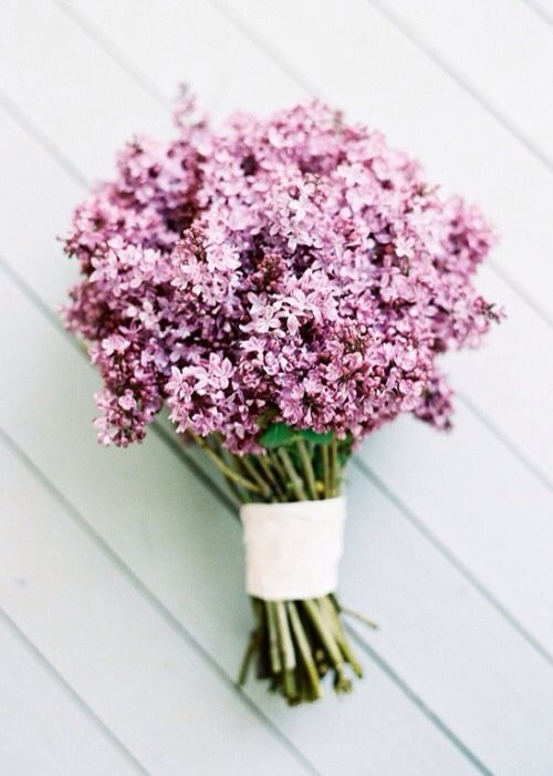 Are they pink, or are they purple? I can't make up my mind, but they're beautiful either way!