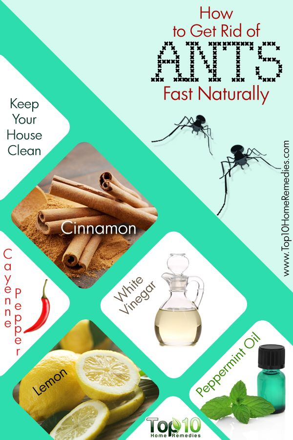 The Secret to  Getting Rid of Ants  Fast and Naturally