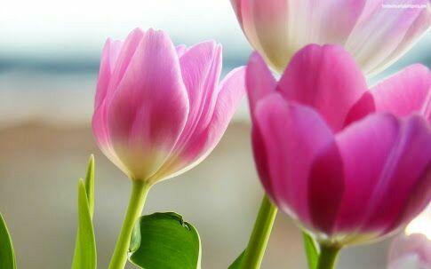 Una flor cada día ...