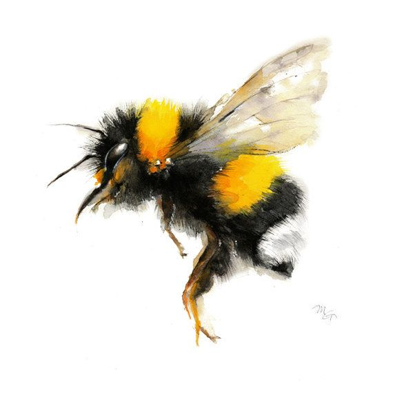 Bee watercolor painting  Bumble Bee Art Print. by MiraGuerquin